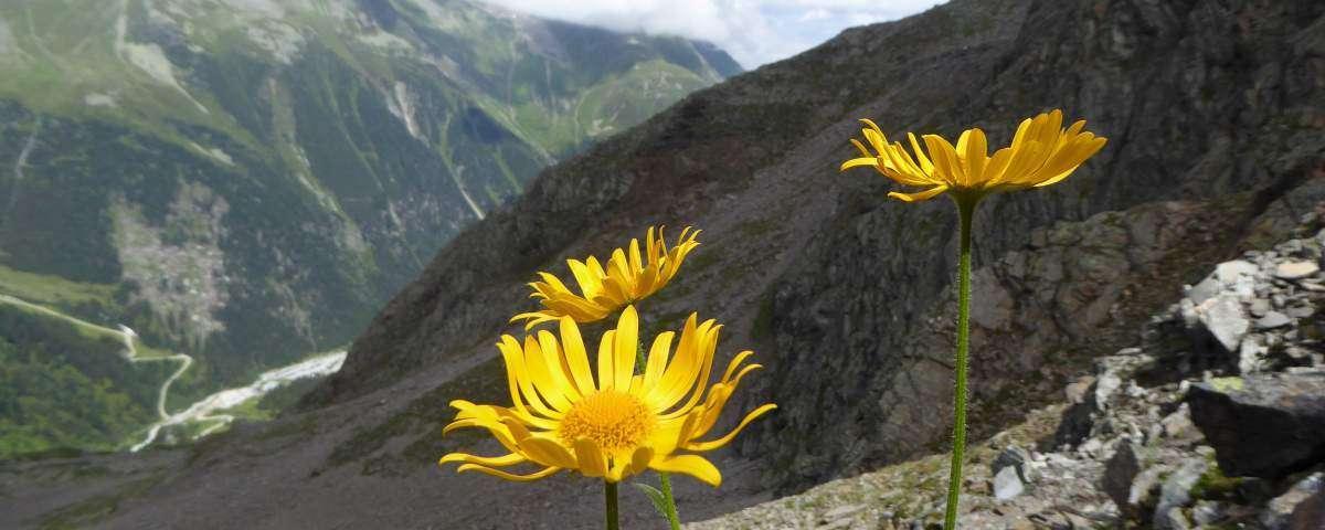 Stubaier Höhenweg übers Peiljoch